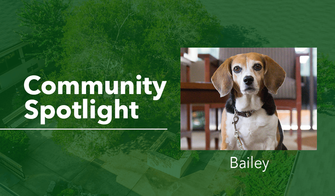 Woodland Ridge Community Spotlight Bailey the Beagle