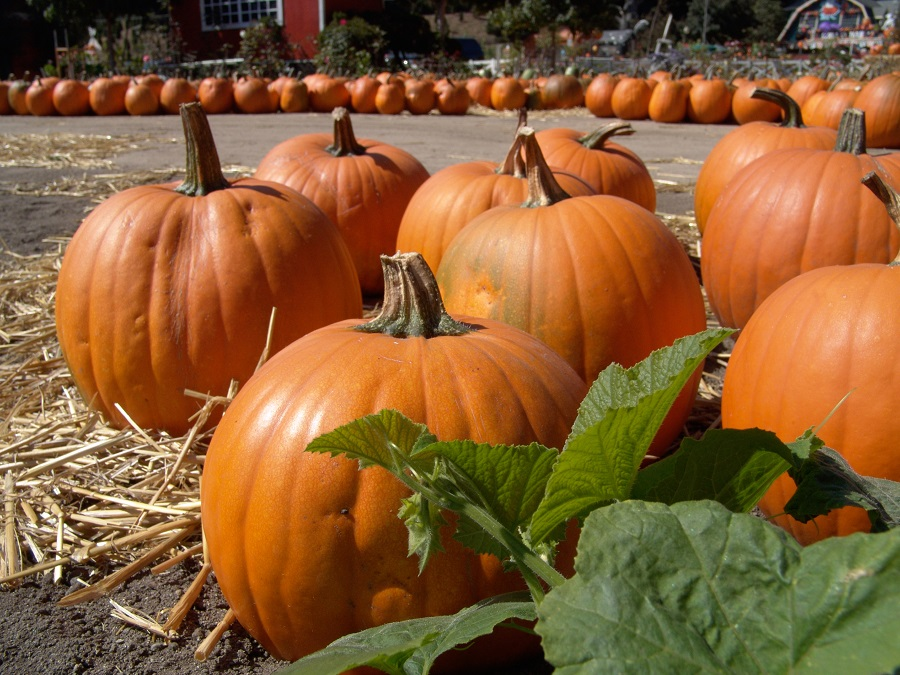 Memory Care Smyrna GA - Woodland Ridge's October Event Calendars